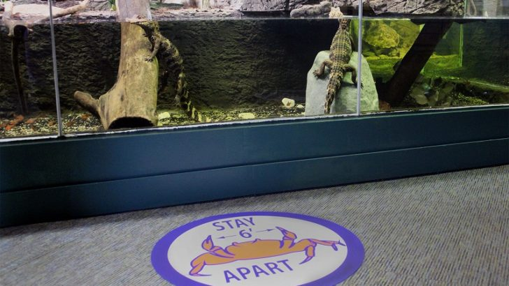 The Maritime Aquarium at Norwalk to reopen to the public on Saturday, June 20 with timed-ticketing and other COVID measures