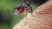Mosquitoes in Stamford Test Positive for West Nile