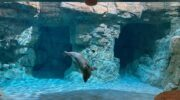 Maritime Aquarium opens new seal habitat; the largest display in its 33-year history