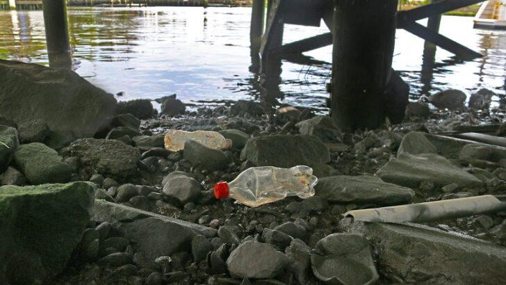 Maritime Aquarium to create teen marine-debris corps and specialized virtual programs